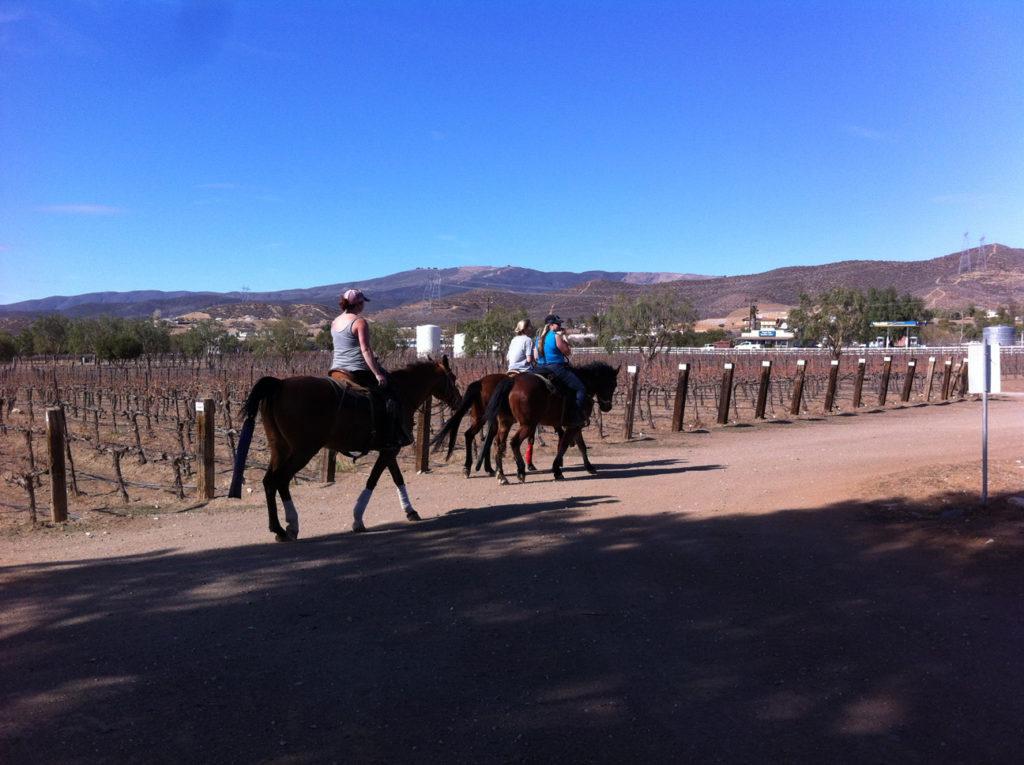 Agua Dulce winery, animals, budget travel, Cabernet, Chardonnay, day trips, ducks, goats, horseback riding, horses, llama, Merlot, Southern California, Syrah, Travel, wine events, wine tasting