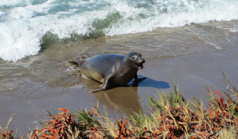 Seals, Central Coast, California, Travel