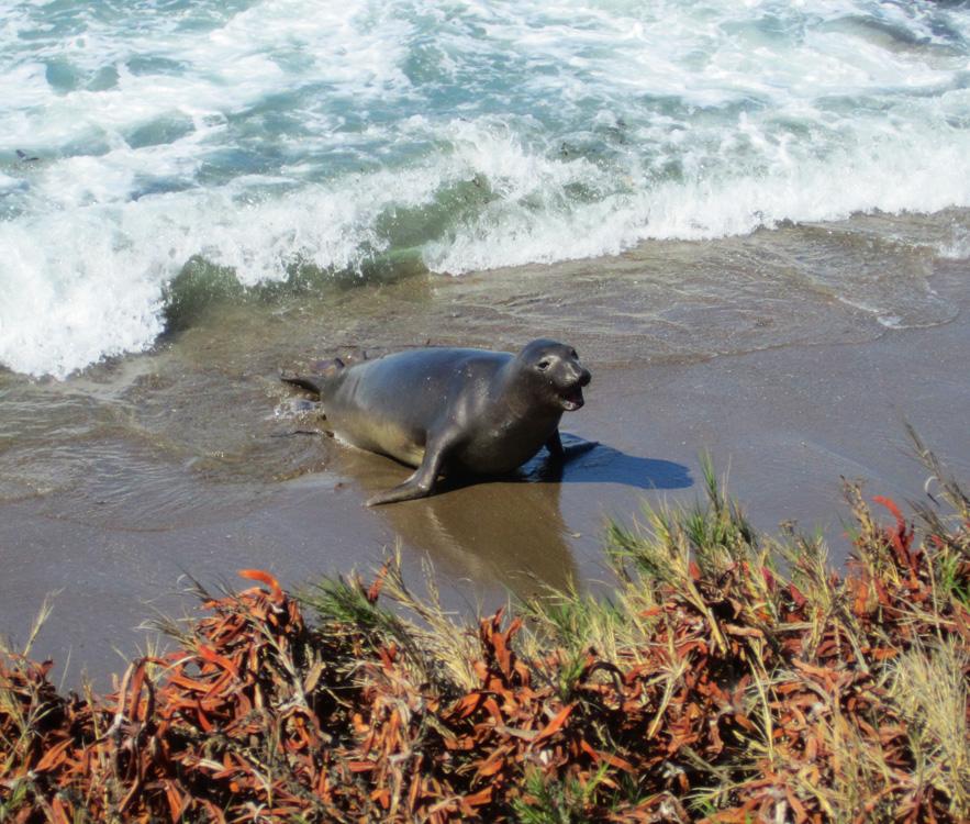 Seals, Central Coast, California, Travel