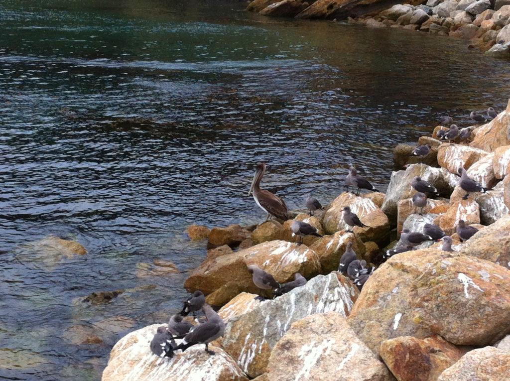 Point Lobos, Carmel, Hiking, Central Coast, Beaches, Ocean, California, Travel