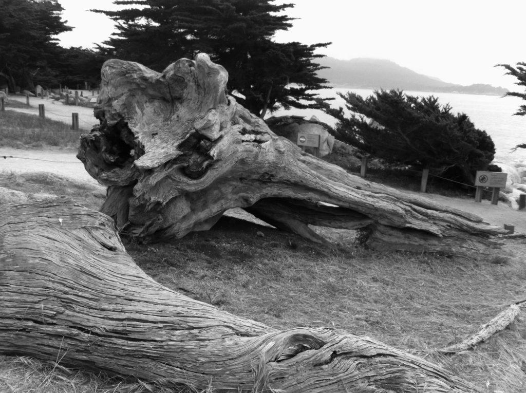 17-Mile Drive, Carmel, Pacific Grove, Monterey, Central Coast, Travel, California, Beaches