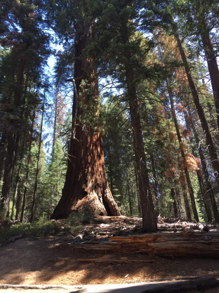 Trail of 100 Giants, Sequoia Trees, Kernville, California, Mountains, Adventure, Travel