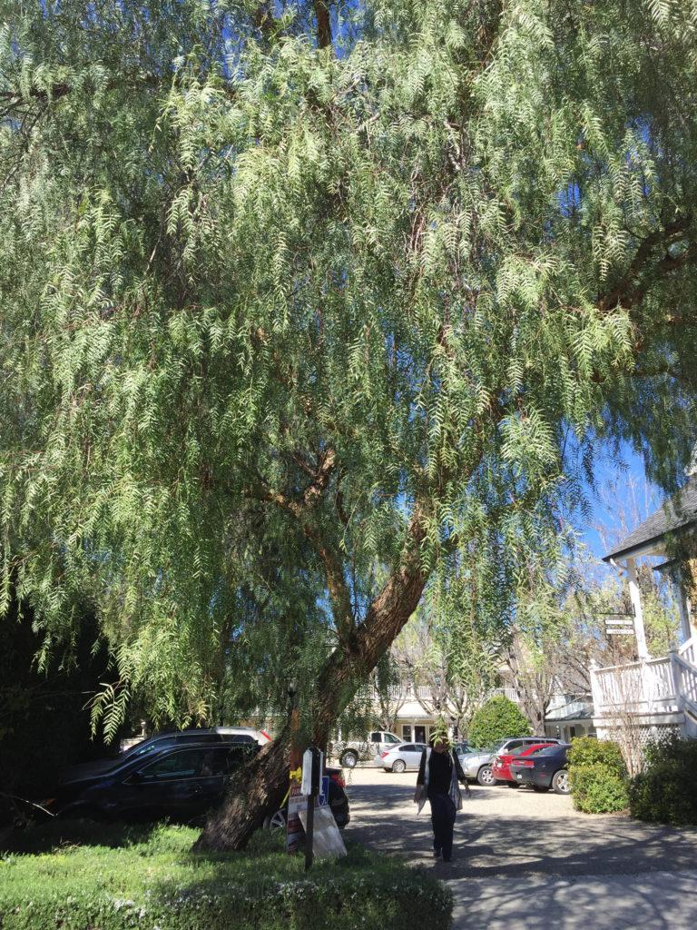Los Olivos, California, Wine, Wine Tastings, Wine Tours, Trees