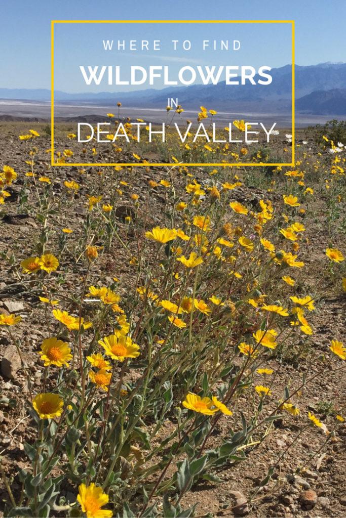 wildflowers in death valley, California, Desert, Travel