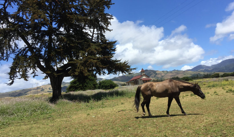 Hearst Ranch Winery Horse in Field