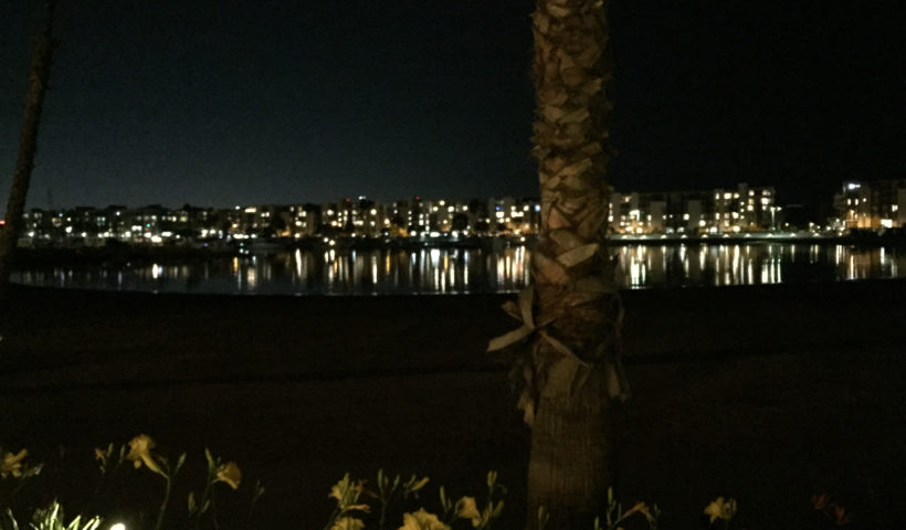 Marina del Rey at night, lights, flowers, palm trees, California, Those Someday Goals