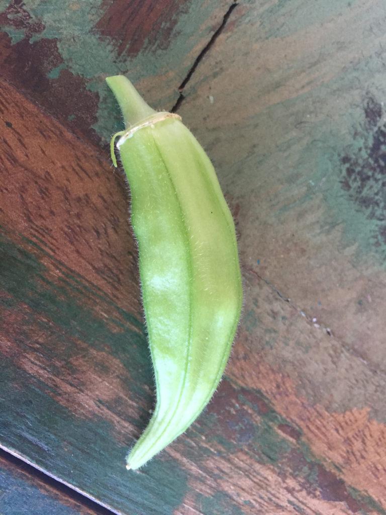 Single okra, harvest, container garden, Those Someday Goals